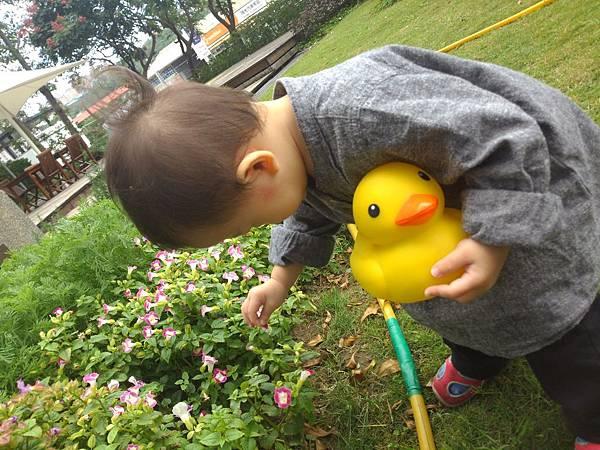 賞黃色小鴨_4