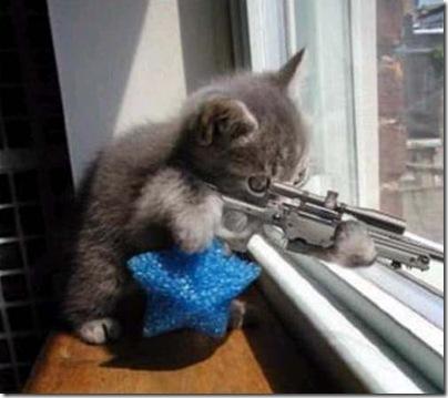 sniper-cat.jpg