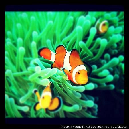 Finding Nemo~~