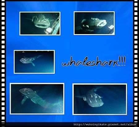 2013 Maldives midnight surprise! Whaleshark