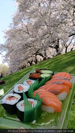 背割堤:出發前買了壽司到此享用午餐