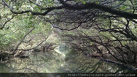 四草紅樹林水上綠色隧道