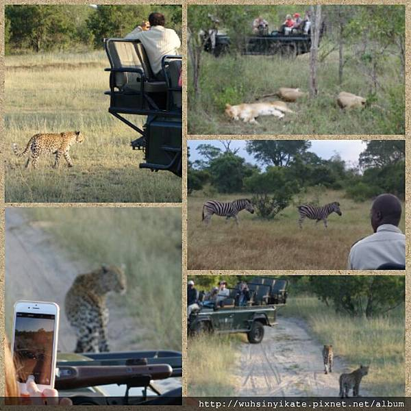 Safari @ Sabi Sands Game Reserve