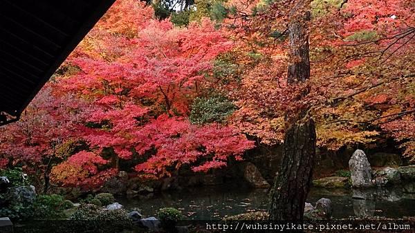 蓮華寺 庭園