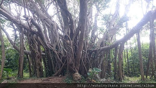 大石林山 亜熱帯自然林コース