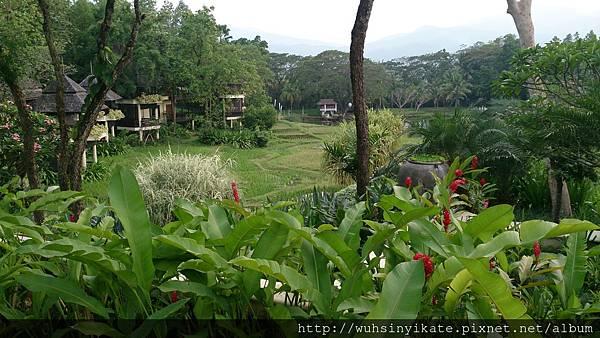 Four Seasons Resort Chiang Mai 農田(真的是還在耕種的田地)