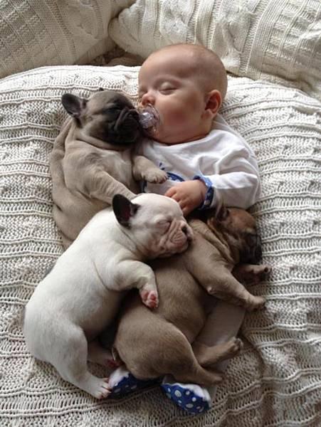 嬰兒 寵物 狗