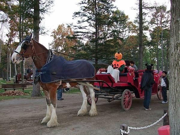 2008-10-22-029馬牧場馬車.jpg
