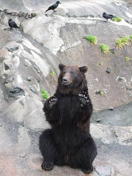 2008-10-23-131熊牧場的熊之我要吃.jpg