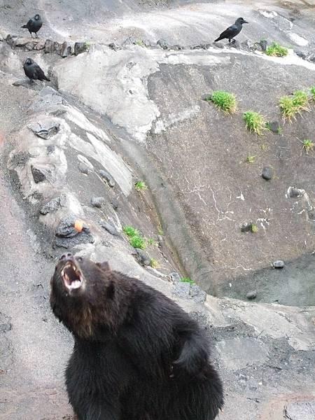 2008-10-23-133熊牧場的熊之再接.jpg