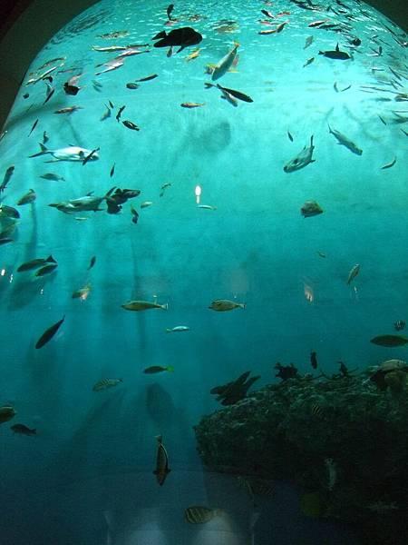 2008-10-23-177NIX海洋公園.jpg