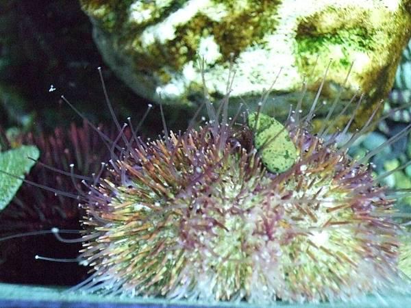 2008-10-23-186NIX海洋公園.jpg