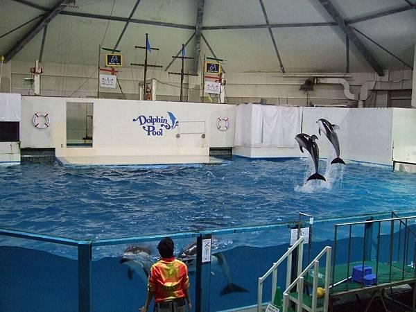 2008-10-23-230NIX海洋公園.jpg