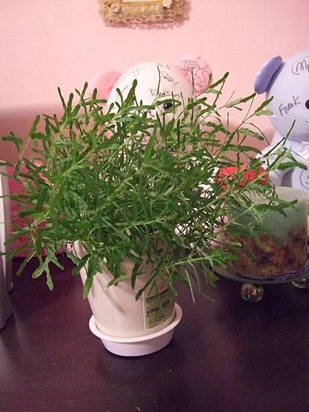 2008-10-26-846變歪的植物.jpg