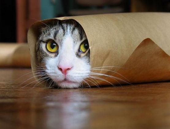 burrito_cat.jpg