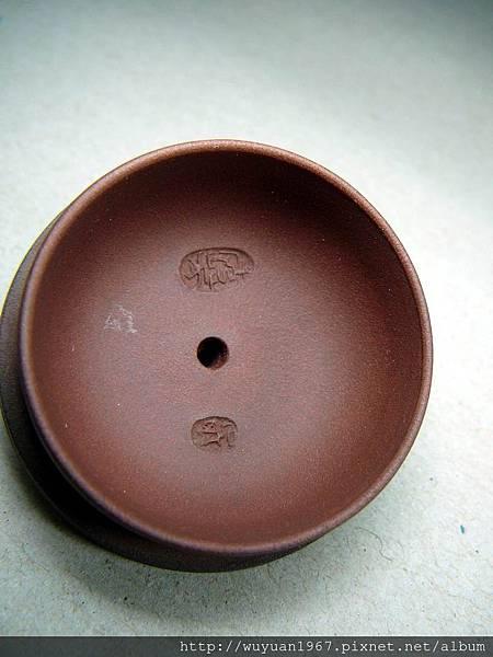 紫泥 一粒珠 (7)