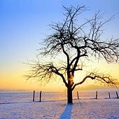 W36冬02.jpg
