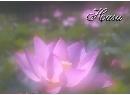 荷花紫日.jpg