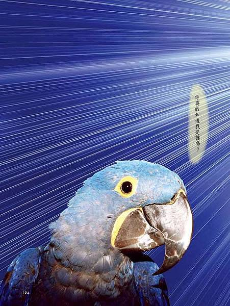 C-BIRDS-EB-S_頁面_124.jpg