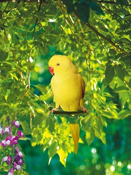 C-BIRDS-EB-S_頁面_017.jpg