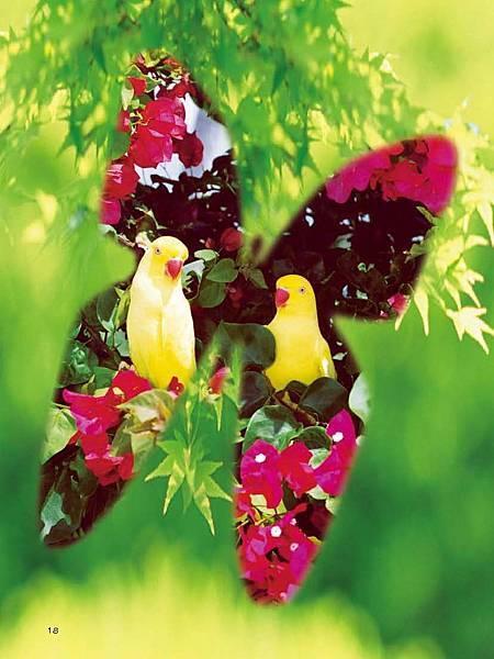 C-BIRDS-EB-S_頁面_018.jpg