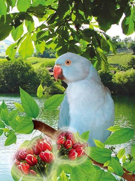 C-BIRDS-EB-S_頁面_041.jpg