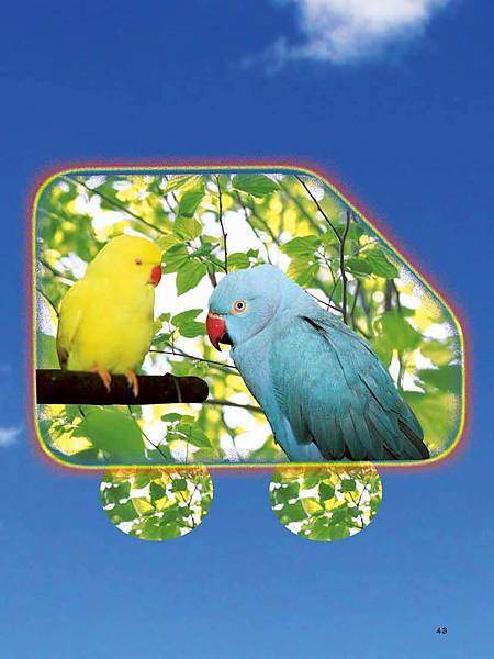 C-BIRDS-EB-S_頁面_043.jpg