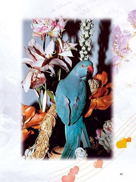 C-BIRDS-EB-S_頁面_051.jpg