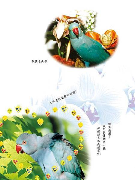 C-BIRDS-EB-S_頁面_046.jpg
