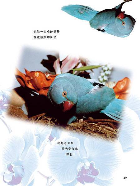 C-BIRDS-EB-S_頁面_047.jpg
