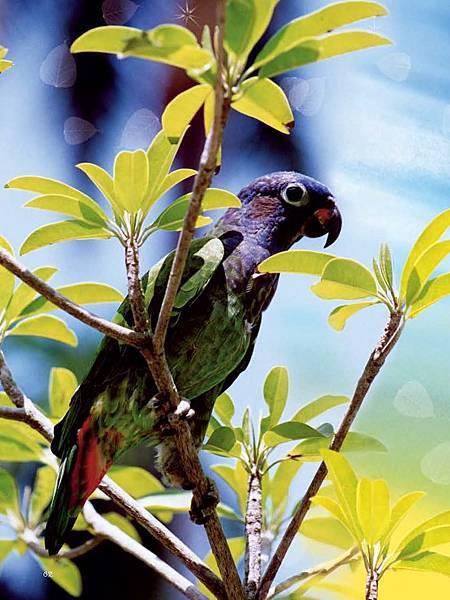 C-BIRDS-EB-S_頁面_062.jpg