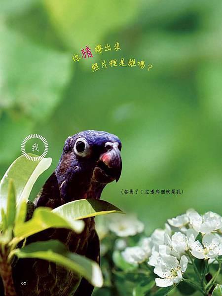 C-BIRDS-EB-S_頁面_060.jpg