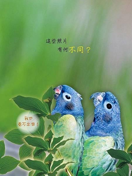 C-BIRDS-EB-S_頁面_065.jpg