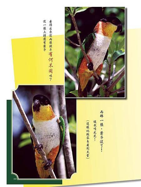 C-BIRDS-EB-S_頁面_086.jpg