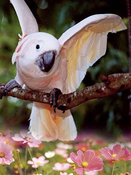 C-BIRDS-EB-S_頁面_093.jpg