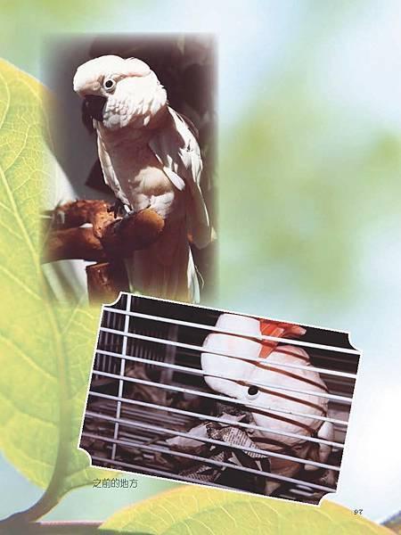 C-BIRDS-EB-S_頁面_097.jpg