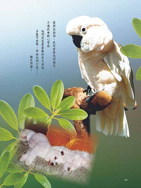 C-BIRDS-EB-S_頁面_099.jpg