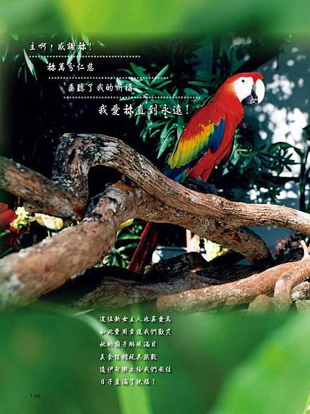 C-BIRDS-EB-S_頁面_108.jpg