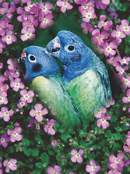 C-BIRDS-EB-S_頁面_150.jpg