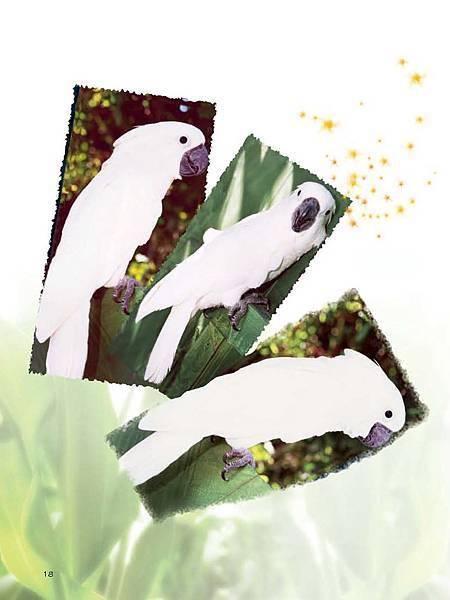 C-BIRDS-EB-S_頁面_166.jpg