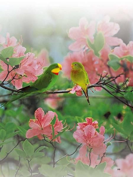 C-BIRDS-EB-S_頁面_203.jpg