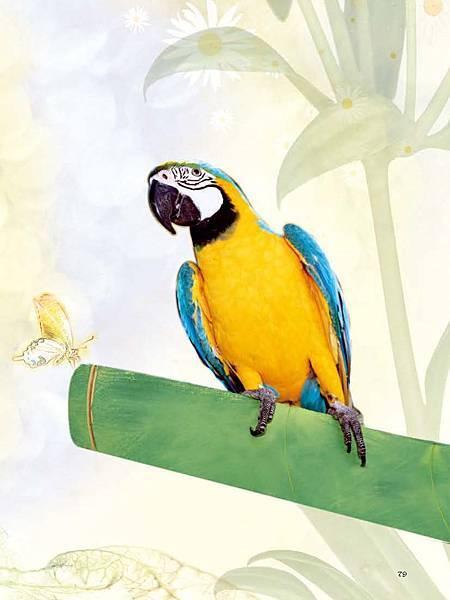 C-BIRDS-EB-S_頁面_227.jpg