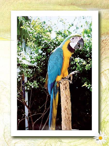 C-BIRDS-EB-S_頁面_231.jpg