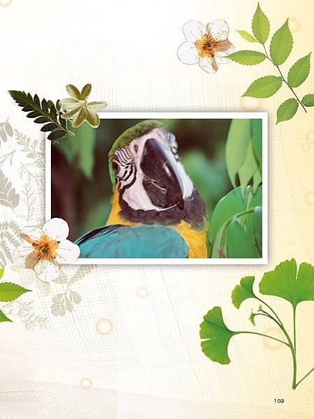 C-BIRDS-EB-S_頁面_251.jpg