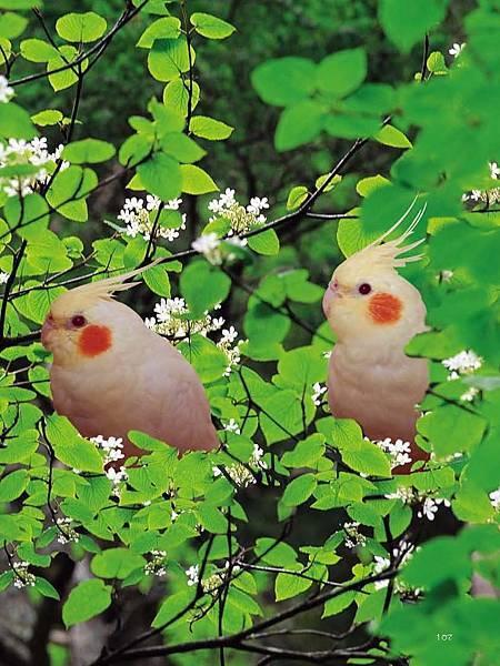 C-BIRDS-EB-S_頁面_255.jpg