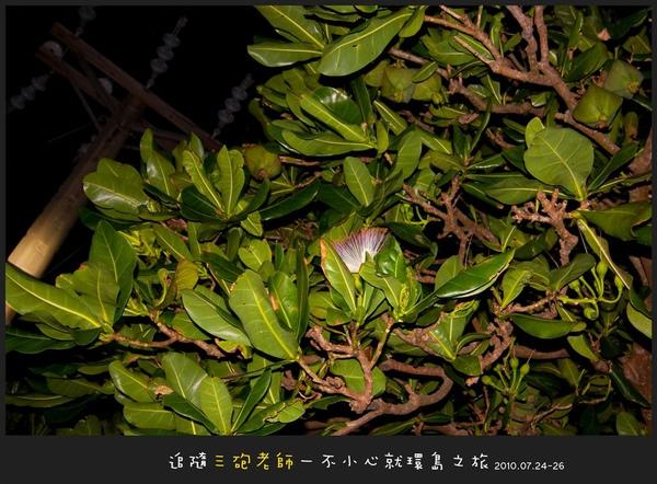 Lanyu_D1_052.jpg