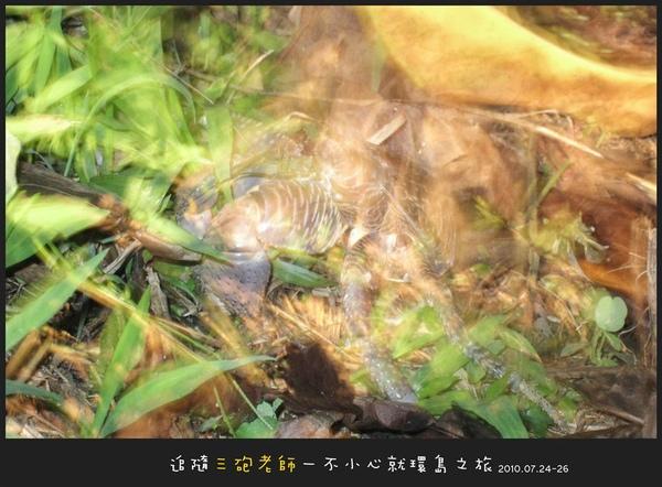 Lanyu_D1_051.jpg