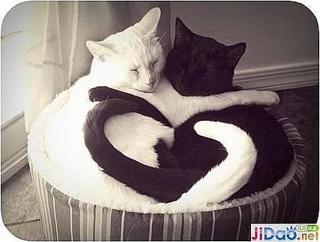 黑貓白貓.jpg