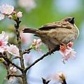 台灣的好花好鳥