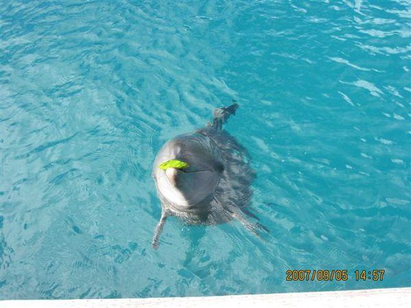 68.海豚.JPG